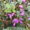 霧雨の中の植物