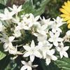 夏に向けて咲いている花たち。庭や散歩コースで出会う身近な花(白い花編)。