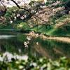 2021年4月の桜