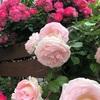薔薇の名前・・君の名は?・・・・からの、ファーマーズマーケット