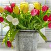 50年に一度咲くお花?