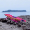 ヤマシタ エギーノぴょんぴょん使ってみた!2017年エギングIN鷹島!ヨネゾウさんとセイカちゃんとコラボしました!