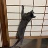 猫の心理から高齢者へのケアを考える