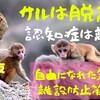 サルは脱走?認知症は離設?自由になれた気がする防止策を教えます!