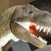 群馬県立自然史博物館でダイナソー祭り