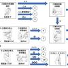 上田式12段階片麻痺機能検査をもっと簡単に!【パッと見でわかるフローチャートつくりました~上肢・下肢編~】