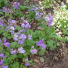 3月も半ば過ぎて桜も開花~15日(月)から19日(金)