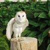 掛川花鳥園|花や鳥に囲まれてフクロウともふれあえるテーマパーク!