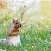 【秋×動物】カナダの街中の紅葉。公園で幼児同士の交流