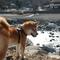 柴犬とバーベキュー(青根キャンプ場)