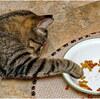 猫にドッグフードを犬にキャットフードを与えてはいけないの知ってた?