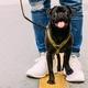 犬の散歩の方法10ステップ