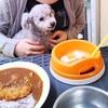 犬とカフェ・バーディに行きました
