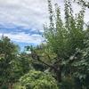 梅が枝の切り落とされて秋の空(あ)