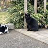 今日の景色 02/24・25 猫とウメジロー