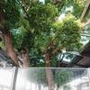 【萱島神社】保存された大クスノキ 再興された社【京阪・萱島駅 駅ナカ】