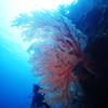 ♪ドリーの冒険はまだかなぁ、、♪〜沖縄那覇慶良間少人数ダイビングショップ〜