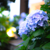 紫陽花撮影のポイントをぼくなりにまとめてみた!