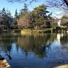 妙正寺川を歩く 神田川合流点から妙正寺池
