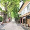 心地よくて住みやすい絵になる街雑司ヶ谷!