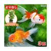 (国産金魚)よりなし(無選別) オランダ獅子頭/オランダシシガシラ 素赤〜更紗(3匹)+ライフマルチ おまかせロタラ(1個)