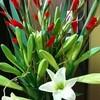 カウンターの花(8)