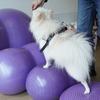 愛犬の健康維持に ~ドッグフィットネス~