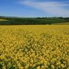 菜の花を求めて ドイツへ 6 ドゥーダーシュタット