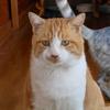 ウチの猫は福を招くかな?