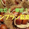 栗の季節到来。予約必須【ラ・ペッシュ】(奈良)の究極和栗のモンブランは賞味期限1時間⁉