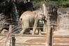 多摩動物公園と京王れーるランドへ2歳の娘と遊びに行ってきた