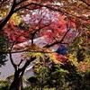 秋の九品寺(くほんじ)