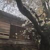 高円寺随一の桜名所 廃墟桜