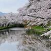 青森の桜の名所は弘前公園だけじゃない!