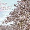 4月8日・月曜日 【造幣局 桜の通り抜け】