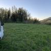 今年3、4回目の筍の収穫
