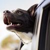 愛犬に「ドライブ」に慣れてもらうために♪