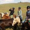 モンゴル 野草散策&伝統療法