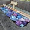 重蔵神社の「花手水」