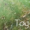 トーゴ・ストーン:Togo Stone(新石器時代~AD10世紀頃の暗黒大陸の勾玉みたいなもの)