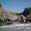 上野恩賜公園入口の桜