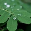英語の名言:葉の隅に輝く一滴の雫にも、ダイヤモンドの美しさがある。 (ロバート・バーンズ)
