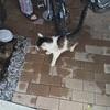 外猫の縄張り