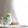 1+第293歩 青い鳥