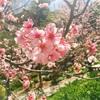 カリフォルニア・サンディエゴおすすめお花見スポット|アメリカ