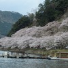 滋賀県)琵琶湖畔「海津大崎の桜」