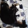 扁平上皮癌になった愛猫を、天にお返しした⑤