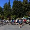 Sequoia Century - 200K