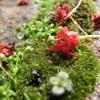 レンガの隙間に生えている 苔の写真 を撮りました。雑草や木の実が乙女チックに仕上げてくれています。