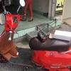 ホーチミンで電動式バイクを購入した話①【thế giới xe chạy điện】